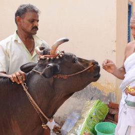 Gho Pooja (Cow Pooja)
